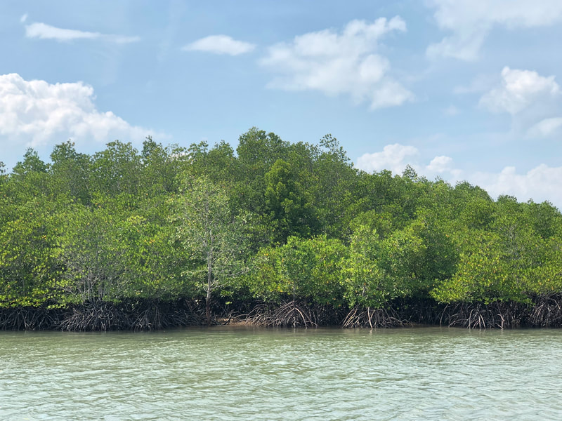 Mangrove trees near the Nongsapura Ferry Terminal